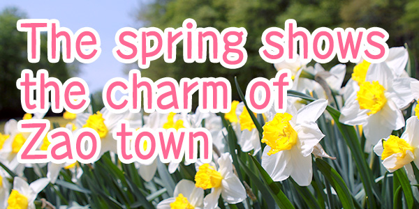 The spring shows the charm of Zao town