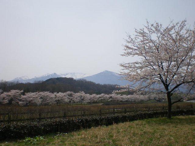 Matsukawa Sabou Park