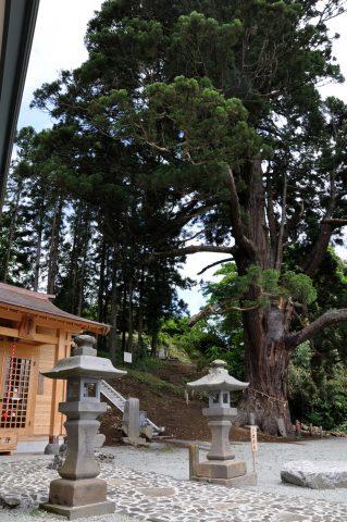 平沢弥陀の杉(ひらさわみだのすぎ)