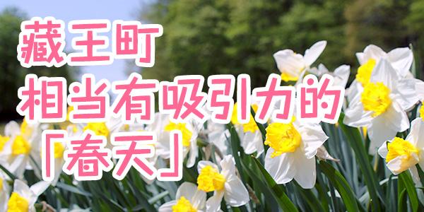 藏王町相当有吸引力的「春天」