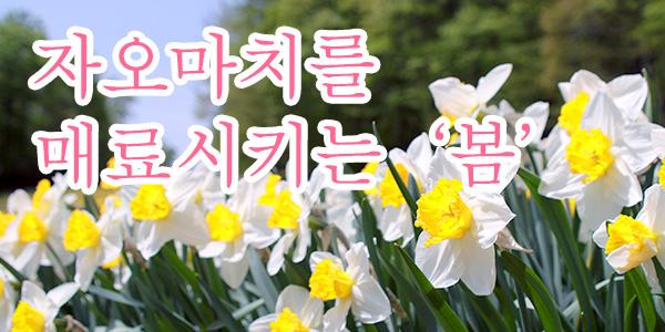 자오마치를 매료시키는 '봄'