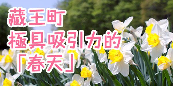 藏王町極具吸引力的「春天」
