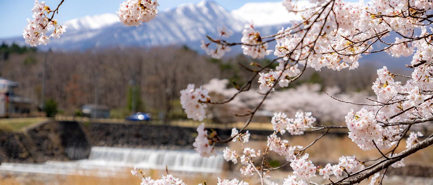 以花朵、美食、活动来感受春天的藏王