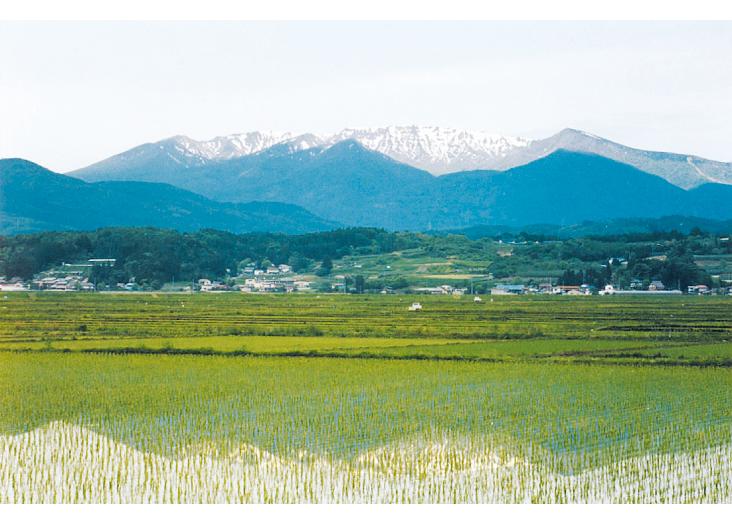Enda Suiden (Rice Paddy)