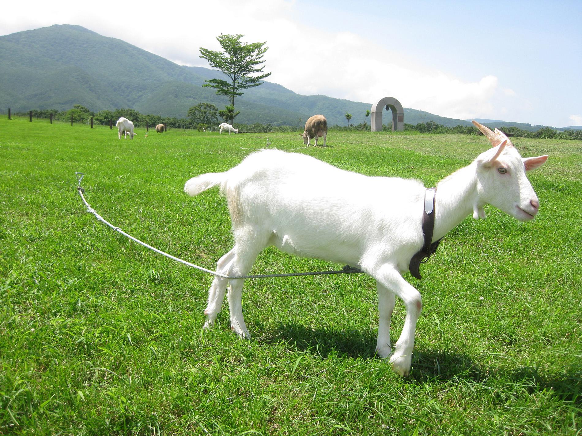 藏王酪农中心(乳制品制作)