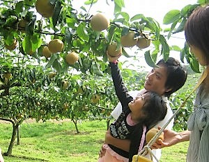 เก็บผลไม้ ลองชิมผลไม้ประจำฤดูกาลของซาโอ้กันเถอะ